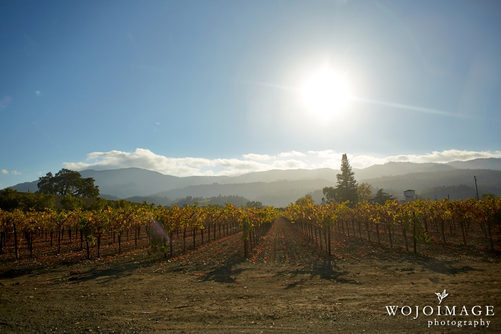 Napa Valley During Fall