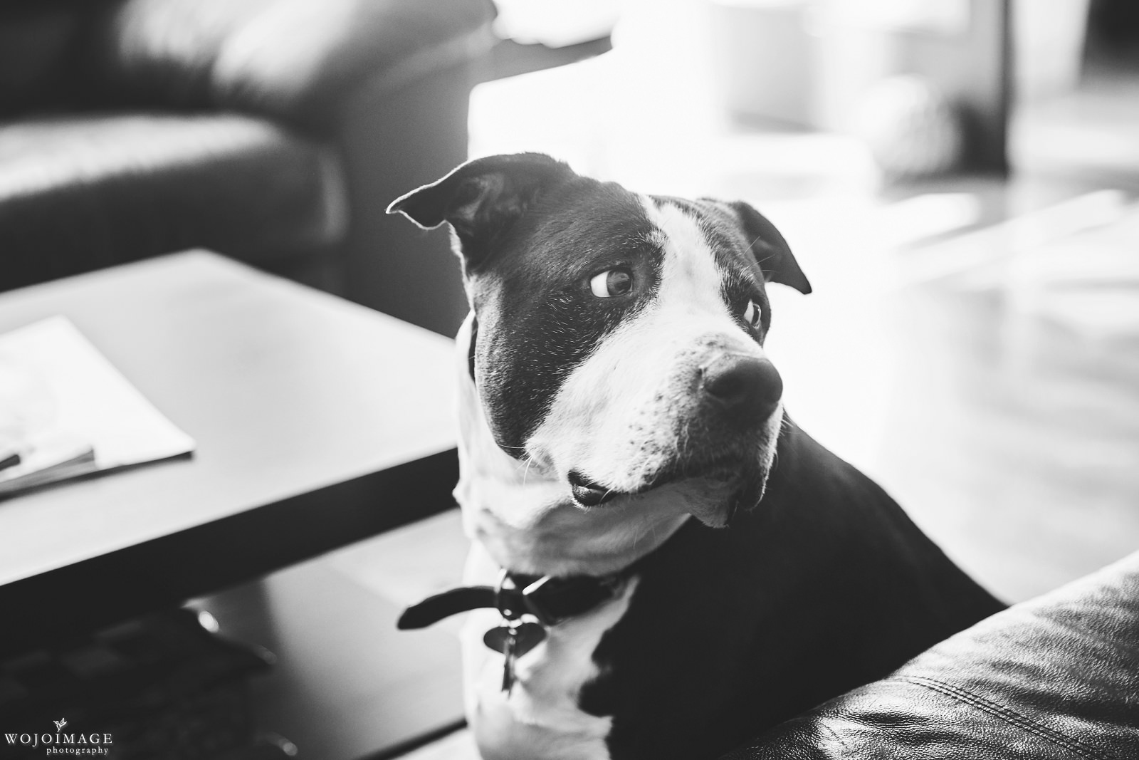 Seattle Pet Lifestyle Photography
