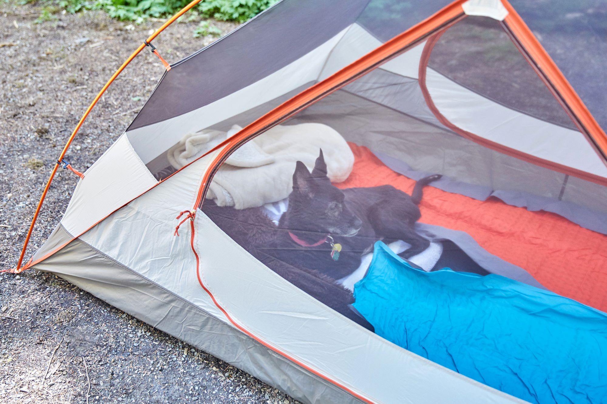 Olympic Peninsula Camping with Pets