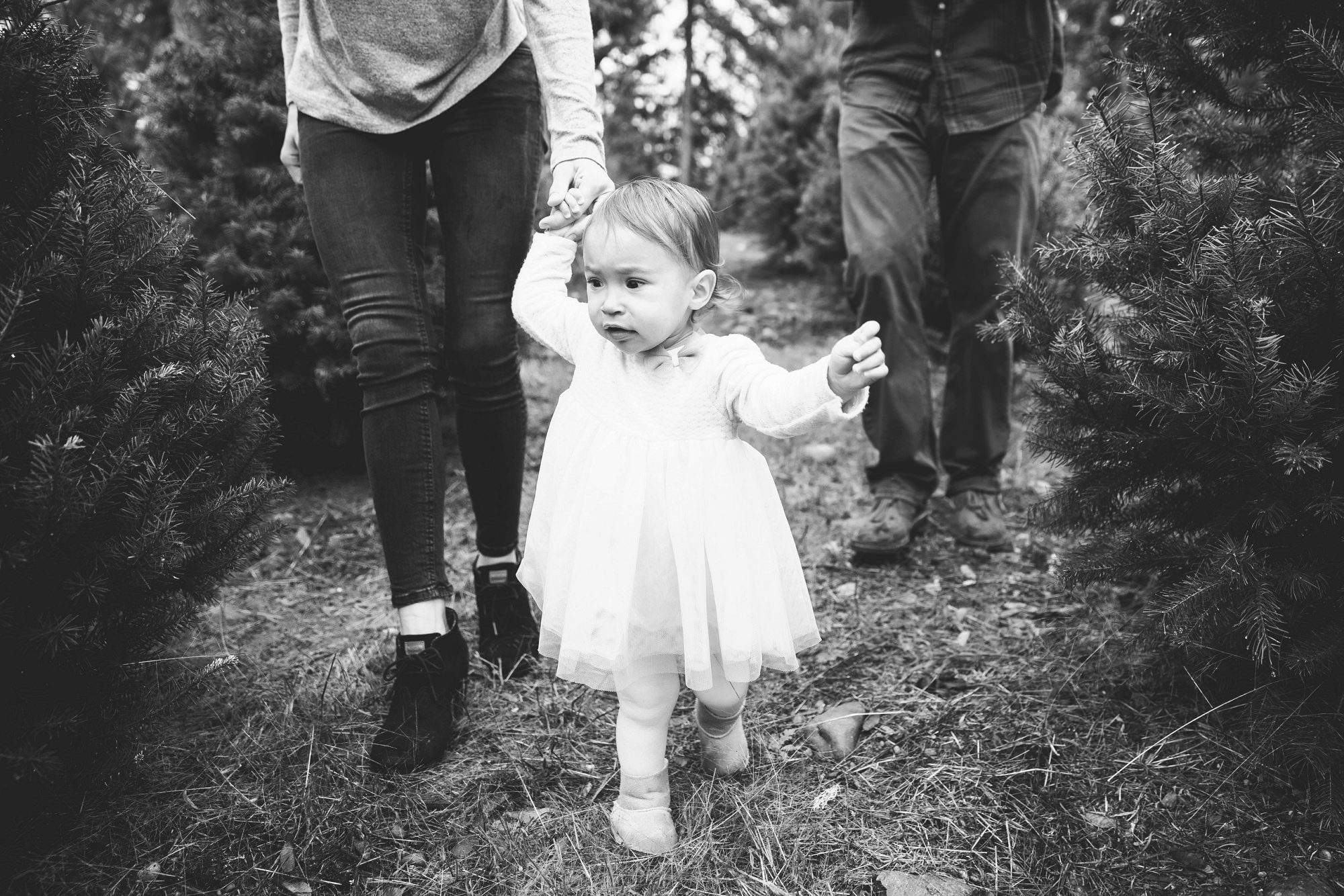 Trinity Tree Farm In Issaquah Family Session