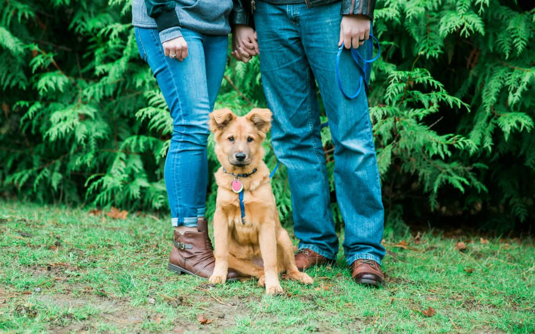 L Family-Seattle Family and Pet Lifestyle Photographer