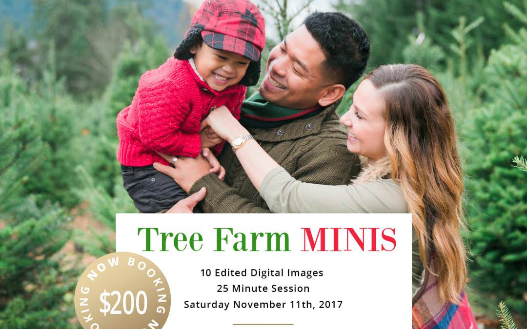 Tree Farm Mini Sessions-Seattle Family Photographer