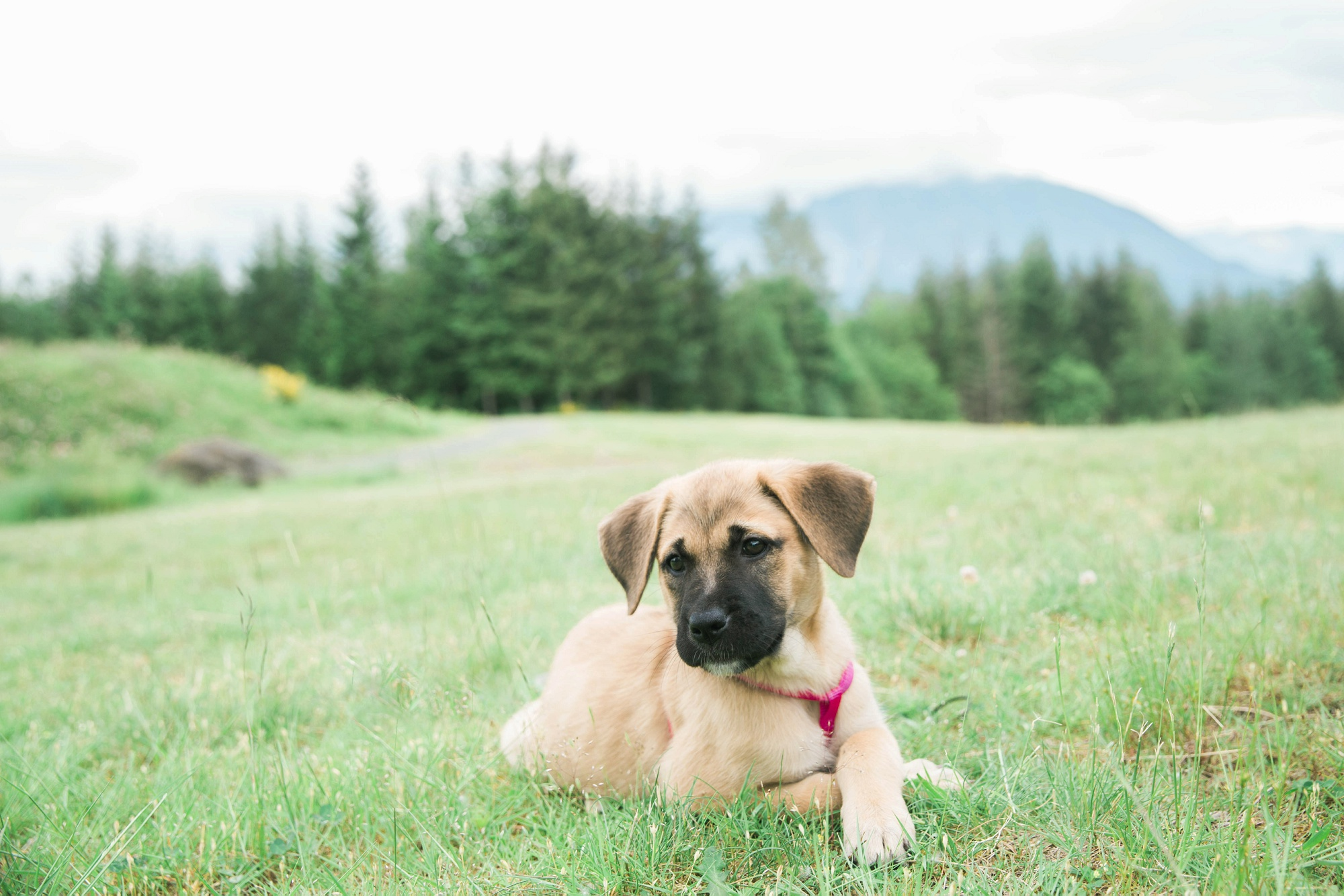 Seattle Pet Photographer
