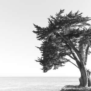 Lonely Tree By The Ocean Wall Art Print