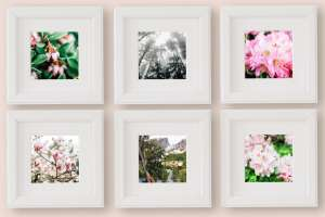 Colorful Nature Prints For Your Home